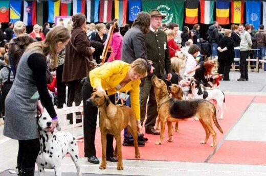 Vilniuje šunų parodoje dalyvavę keturkojai įamžinti filmuke