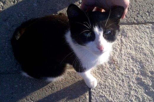 Jaunas katinėlis ieško namų