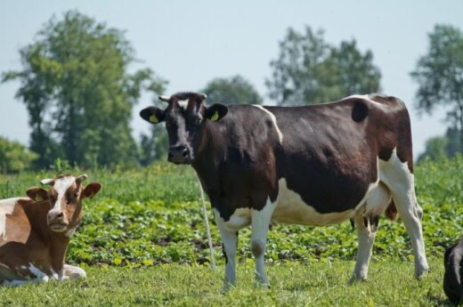 Lithuanian milk producers to receive state aid in early December