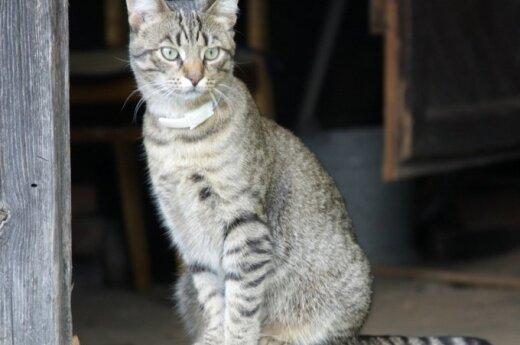 Svajonių katinas Spirgis ieško namučių