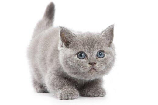 Rosja: Oszukani ludzie wysłali kota w kosmos