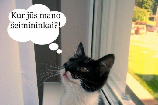 Dovanojamas 2,5 mėn. žavingas, visada besišypsantis kačiukas Kenzo
