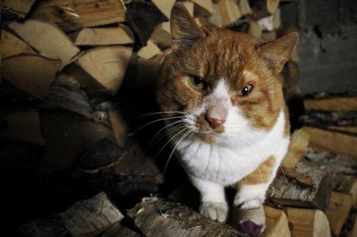 Katinas Kvazimodas ieško savo Esmeraldos
