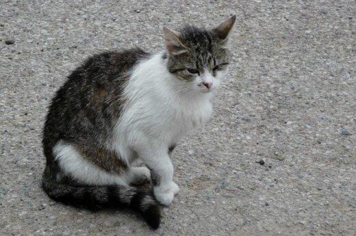 Katinėlių šeima: jie tik nori gyventi...