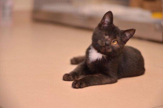 Kačiuko Pypliuko svajonė - tikri namai!