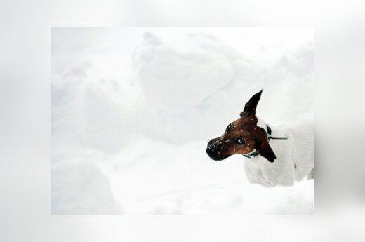 Šuo, žiema, sniegas