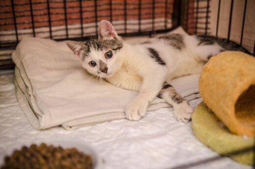 Atstumta katytė Liva šįkart tikisi iškeliauti į namus visiems laikams