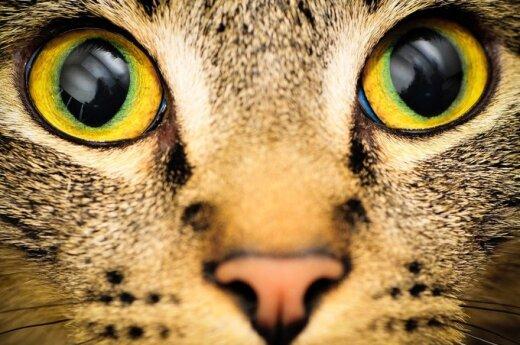 Katės - paslaptingi naminiai gyvūnai