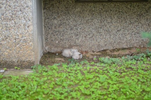 Fabijoniškių beglobės katytės prašo pagalbos!