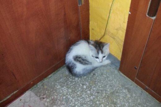 Dovanojama mažytė katytė