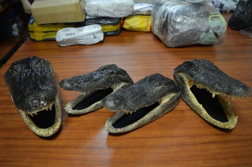 Man with four alligator heads stopped at Vilnius Airport