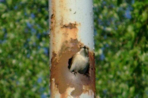 Paukštis rado netikėtą vietą sparnams pailsinti