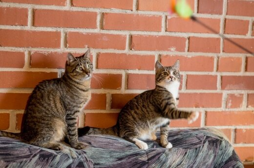 Namų ieško katytė Runa