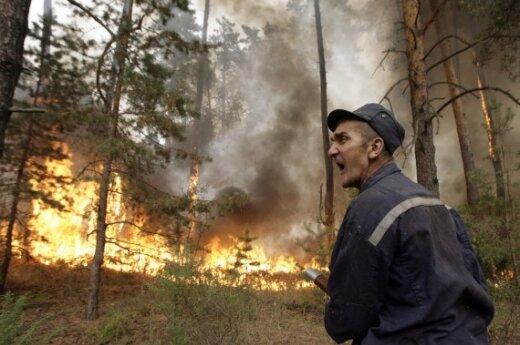Перед пожарами в Подмосковье уволили 500 лесников
