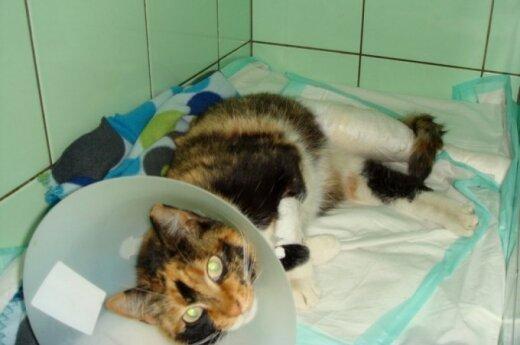 Sadizmo apraiška Lazdynuose: katytė Scarlet surinkta iš naujo