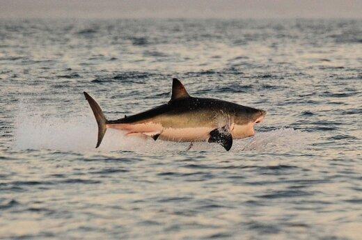 Акулы Красного моря начали приносить Египту доход