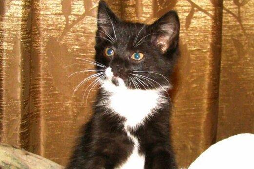 Katinėlis Mikas - Murkutis ieško namučių