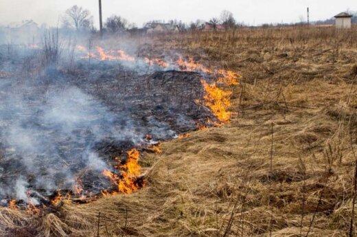 Первая жертва сжигаемого старника