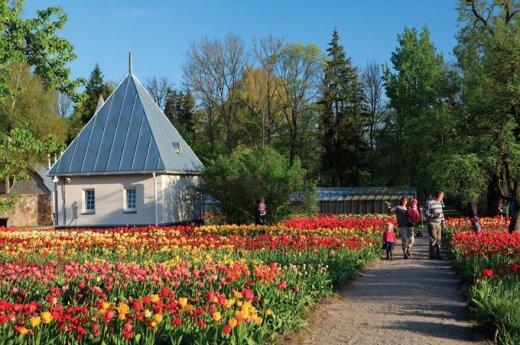 Tulpių žydėjimo šventė, Terra Publika nuotr.