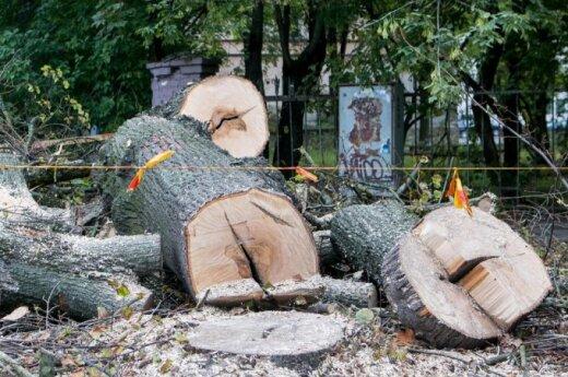 Pjaunami medžiai