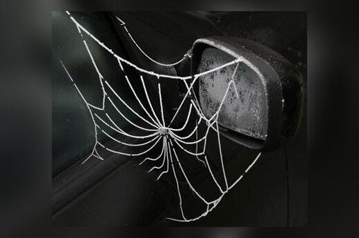 Sustingęs voratinklis