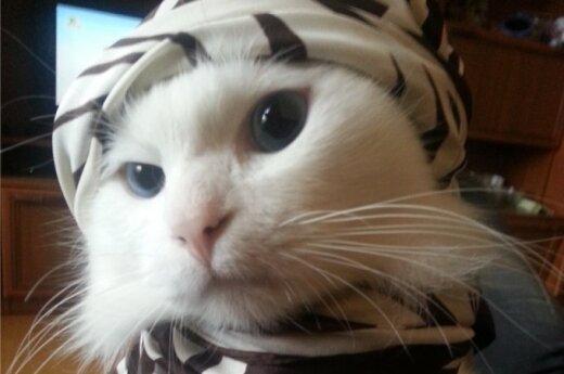 Baltas nepaprastas katinas ieško namų