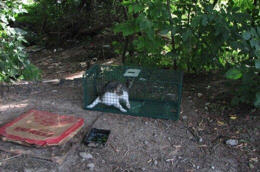 Skelbia bendro projekto pradžią: griauna mitus apie gyvūnų sterilizaciją