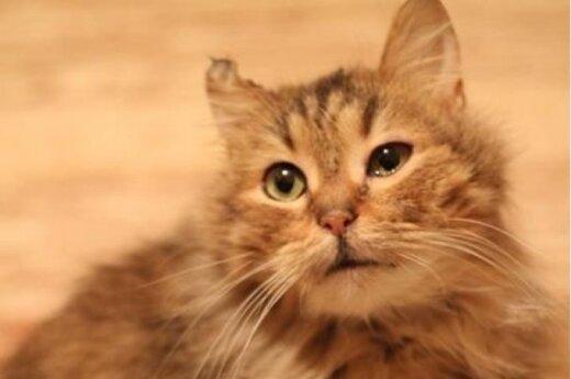 Ypatinga katytė ieško ypatingų šeimininkų!