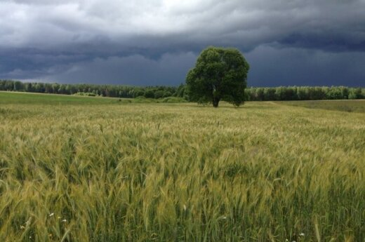 Lithuanian Chamber of Agriculture warns about GMO crops