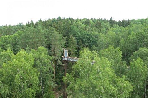 Medžių lajų takas Anykščiuose