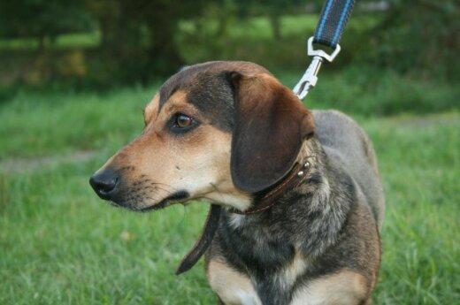 Rastas šuniukas Tukas: ieško šeimininkų arba naujų globėjų