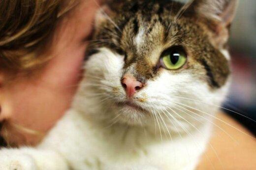 Dėmesio – Lazdynuose dingo beakis katinas!