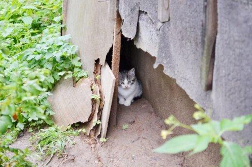 Keturi kačiukai prašo šanso turėti namus!