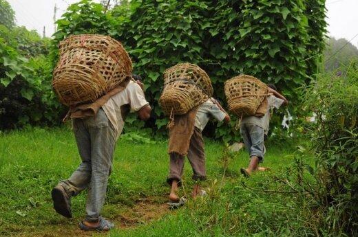 Światowy Dzień Walki z Pracą Dzieci