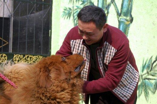 W chińskim zoo lew okazał się psem
