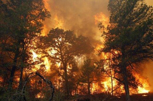 Gaisrai Teksase jau sunaikino beveik 500 namų