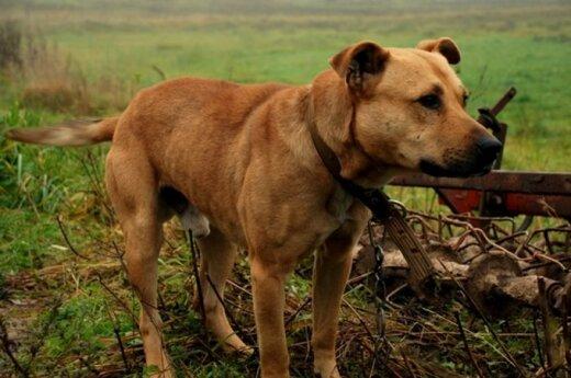 Šuo, kuris šypsosi, laukia naujų šeimininkų