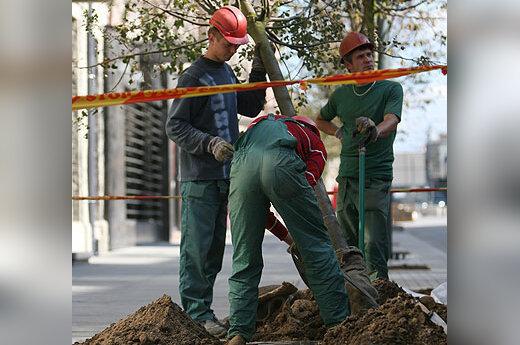 Darbininkai sodina medį Gedimino prospekte