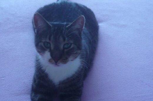 Katinėlis Vincukas ieško namų
