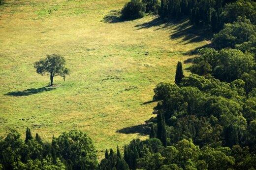 """""""Karštas vakaras"""": ar miškai taps kolektyviniais sodais?"""