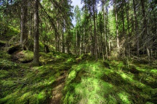 Valakampių miške - šiurpus radinys