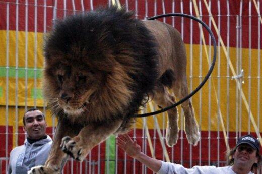 """Nuomonė. Gyvūnų kančia – pramoga """"elitui""""?"""