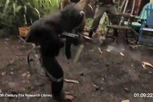 Beždžionė su automatu