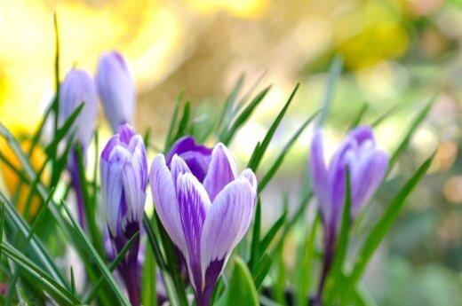 Horoskopas savaitei (vasario 29 - kovo 6 d.): teks keisti požiūrį