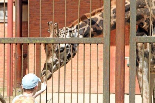 Литовскому зоологическому саду - 77 лет