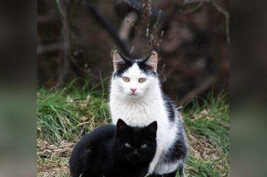 Кошка может заразить шизофренией