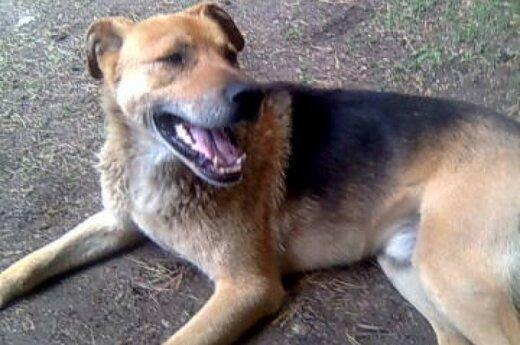 Terešiškėse glaudžiasi pasimetęs šuo, skubiai ieškoma globa