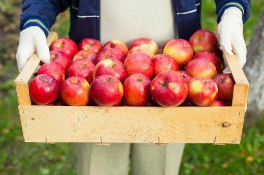 яблочный уксус от паразитов рецепты
