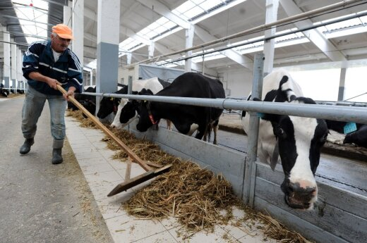 Chinese delegation visits Lithuanian dairies