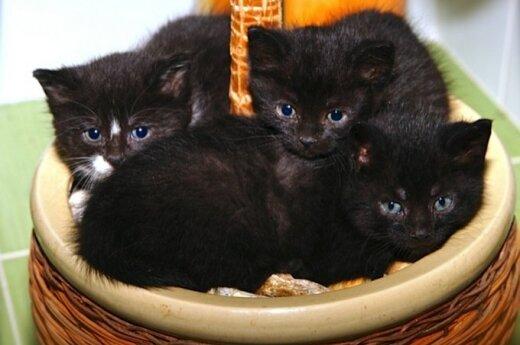 Trys paršeliai ieško namų ir prašo mažytės paramos paršelių nameliams